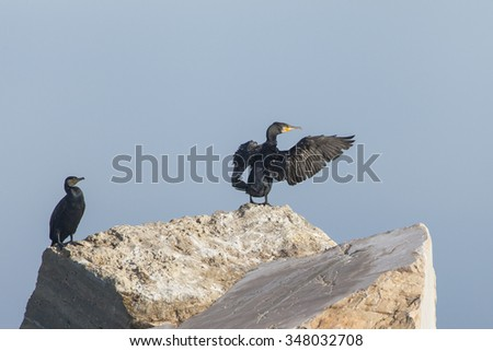 Two cormorants rest on the rocks, Adriatic sea background. Blue sky