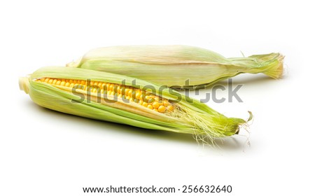 Two corn cobs on a white background