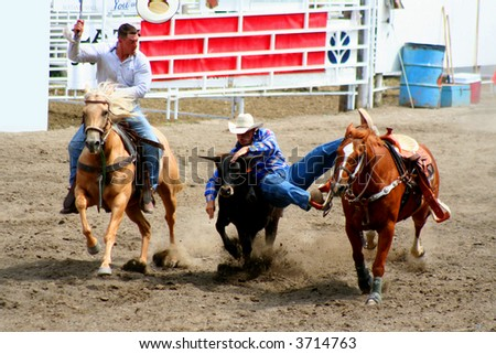two cowboys wrestling a steer