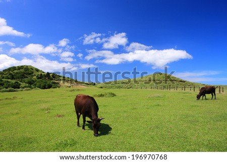 Two cows grazing in an open pasture with hills. - stock photo