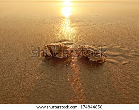 Two crabs in the wet sand at sunset - stock photo