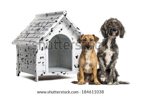 Two Crossbreed dogs sitting in front of a spotted kennel - stock photo