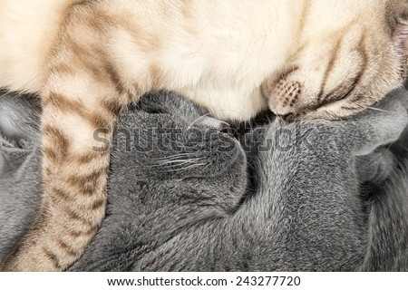 two cuddling cats - stock photo