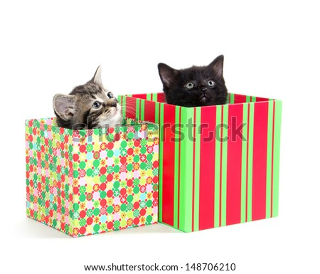 Two cute baby kittens inside of gift boxes on white background
