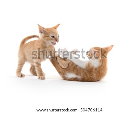 Two cute baby kittens playing and fighting on white background