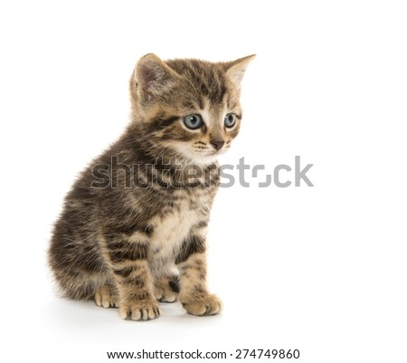 Two cute baby tabby kittens sitting and isolated on white background