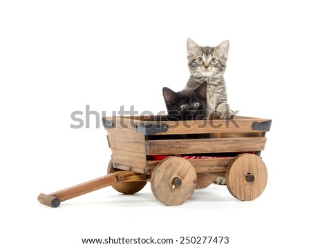 Two cute black and tabby baby kittens sitting inside of wagon isolated on white background