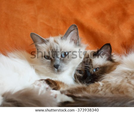 Two cute cats sleeping laying on bed close to each other - stock photo