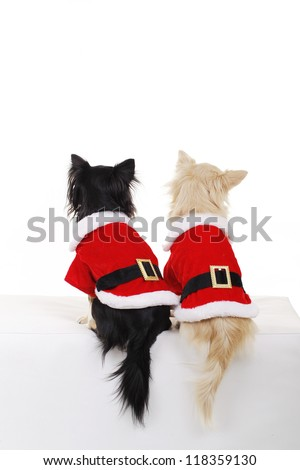 Two cute chihuahua dogs in santa costume from the rear