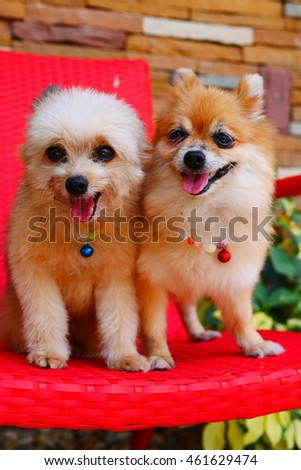 Two cute dogs on a red chair in the garden surroundings