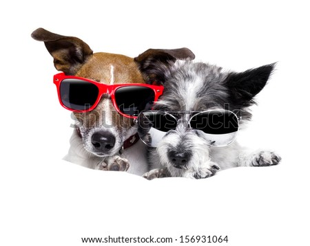 two cute dogs very close together as a couple  - stock photo