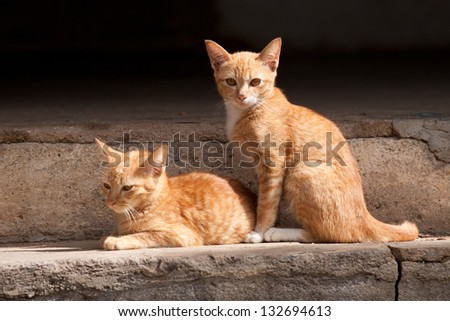 Two cute domestic short hair cats Rest On the cement floor