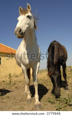 Two cute horses pose for portrait in farm - stock photo