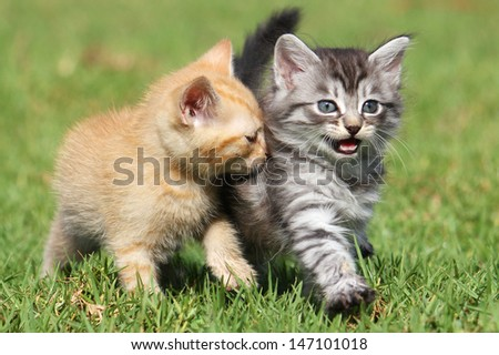 Two cute kittens out for a stroll - stock photo