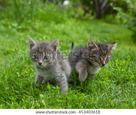 Two cute kittens running  in the grass looking puzzled