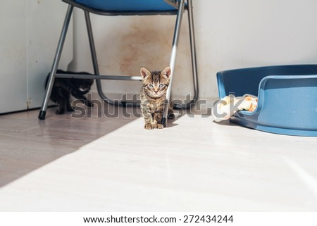 Two cute little grey tabby kittens playing in a kitchen under a metal chair alongside their bed as they enjoy the sunshine, with copyspace - stock photo
