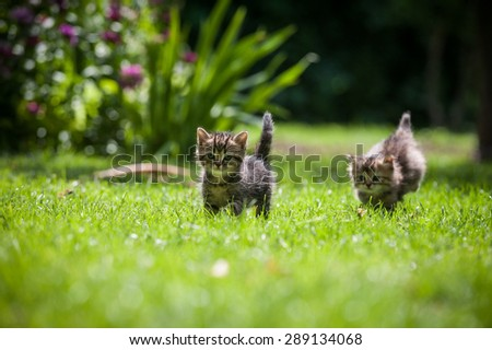 Two cute little kittens chase each other on a green lawn - stock photo