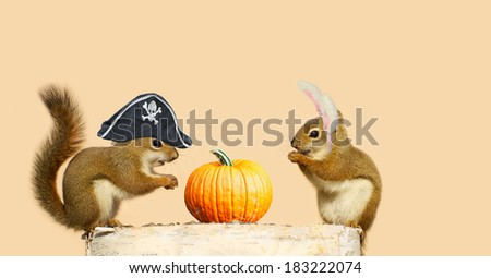 Two cute squirrels with their Halloween hats on, perched up on  log, with a pumpkin. Part of a fun series. - stock photo