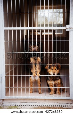 two cute strayed dogs in dog shelter
