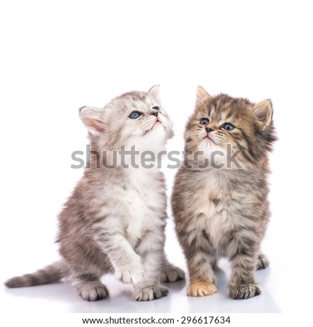 Two Cute tabby kittens looking up on white background isolate - stock photo