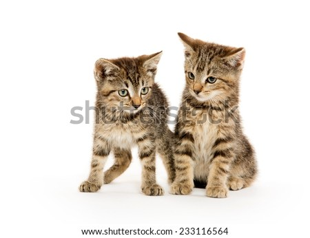 Two cute tabby kittens on white background - stock photo