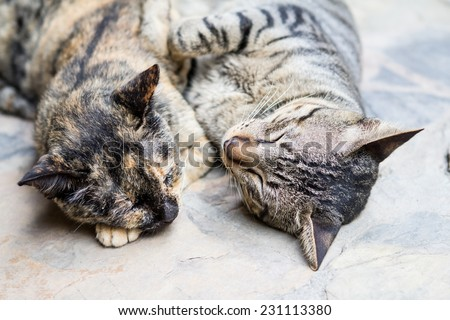 Two cutes cats sleeping , selective focus - stock photo