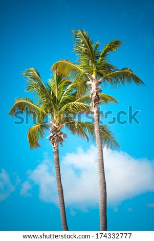 Two date palm in front of blue sky.