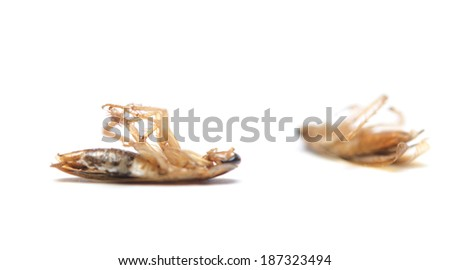 two dead cockroaches on white background