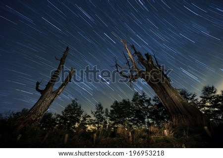 Two dead trees with a meteor shower in the background. - stock photo