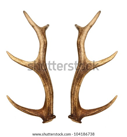 Two deer horns isolated on white - stock photo