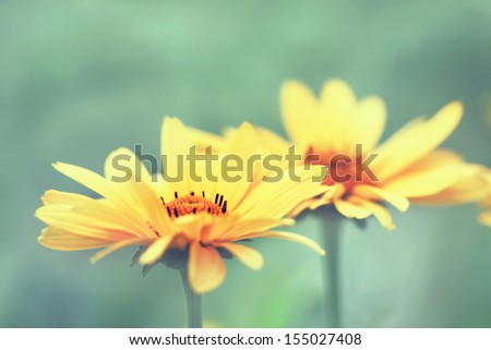 two delicate yellow flowers - stock photo