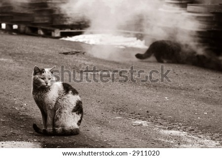 two dirty homeless cats warms themselves in industrial steam - stock photo