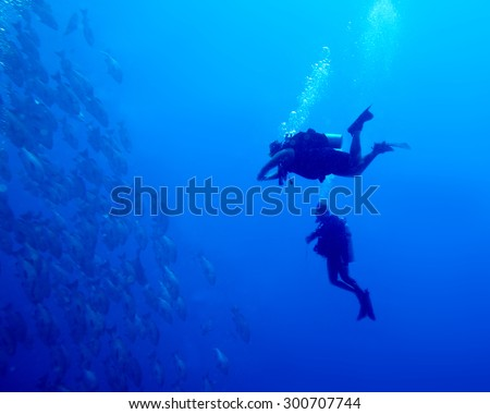 Two divers approaching a school of  Black Snapper hanging  at 20m just off Ras Mohammad,  Red Sea, Egypt.  Deep blue sea, natural sunlight.