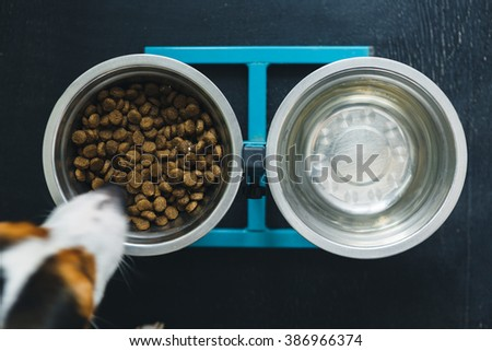 Two dog bowls on turquoise stand , on a black wooden desk. Dog eating from bowl, top view. - stock photo