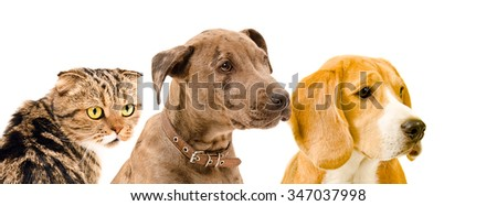 Two dogs and a cat together, closeup, isolated on a white background - stock photo