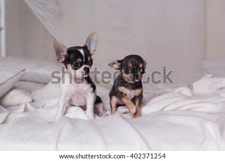 Two dogs are sitting on bed - stock photo