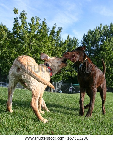 two dogs at a local public pool - stock photo