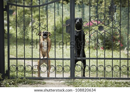 Two dogs behind metal fence. - stock photo