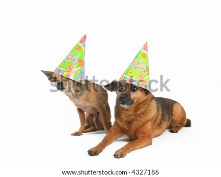 two dogs celebrating a birthday with hats on