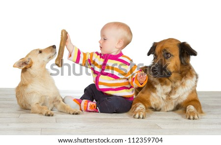 Two dogs flanking a cute baby which is offering the jack russel terrier a chewy bone watched in envy by the gentle crossbreed - stock photo