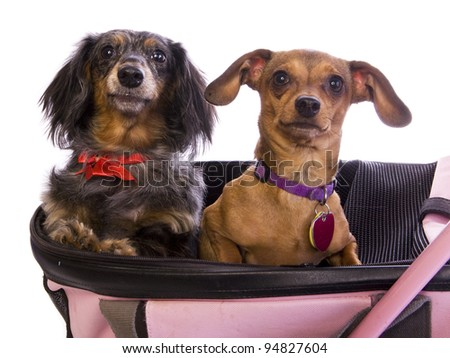 Two dogs in stroller together isolated on white - stock photo