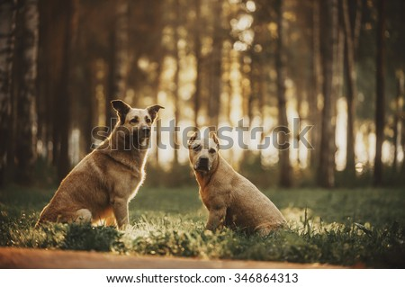 Two dogs in the rays of light at dawn