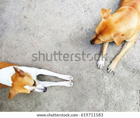 Laying on ground stock images royalty free images vectors shutterstock - Dogs for small spaces concept ...