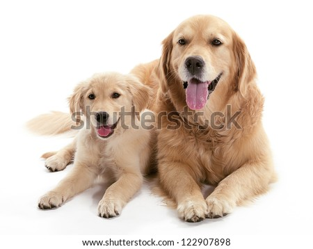 Two dogs laying together on the floor - stock photo
