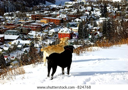 two dogs looking over small town - stock photo