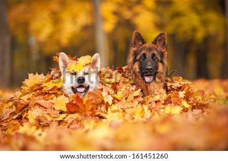 Two dogs lying in leaves  - stock photo