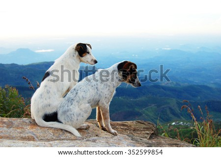 Two dogs on a cliff, Sri Lanka - stock photo