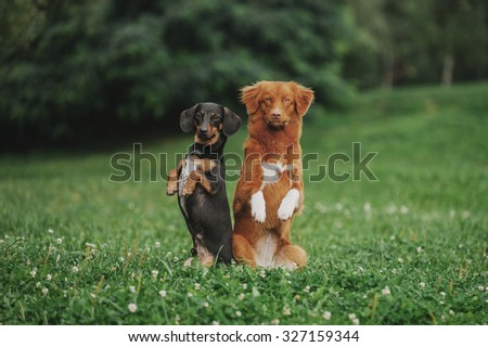 Two dogs on a green grass stand column
