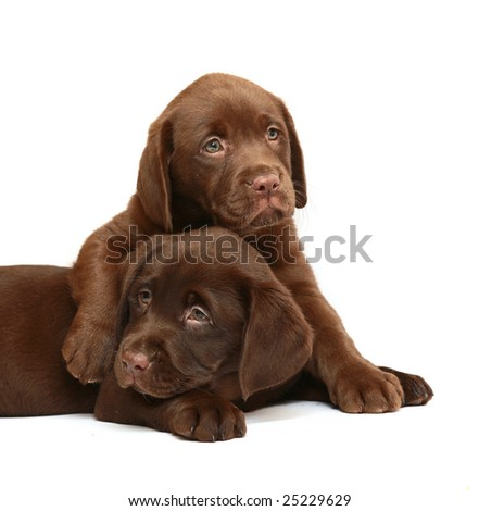 Two dogs on a white background.