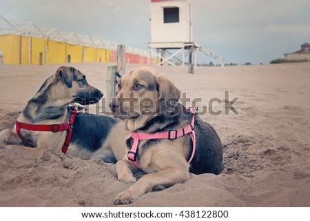 Two dogs on the sand resting in Mar del PLata, Argentina